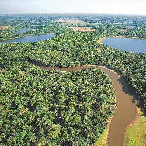 Aerial view of Pantanal in Mato Grosso do Sul